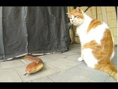 Kočenka sleduje hada na RC ovládání. Fakt legrace.