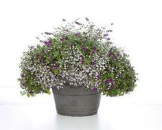 """Lavender Springs"" Perfect for those Vintage Wash Tubs that I have!"