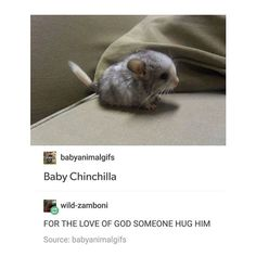 It's so cute and tiny and I just wanna hug this cute little fur ball until I'm dead. Cute Little Animals, Cute Funny Animals, Funny Cute, Cute Creatures, Beautiful Creatures, Animals Beautiful, Dogs Tumblr, Animal Tumblr, Animal Quotes