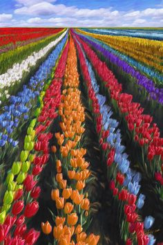 Holland (Paul Smith' Field), 2007 - 120х180cm