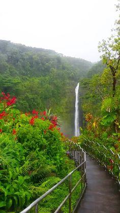 Akaka Falls loop trail in Hawaii: Hike the circle route to waterfalls in Akaka Falls State Park! 🌴 Big Island Hawaii travel blog - Flashpacking America