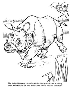 Indian Rhinoceros drawing and coloring page