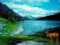 paisaje montañoso con ciervo