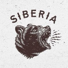 Typography | Type | Lettering | Drawing | Bear |
