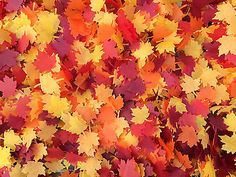 Autumn Maple Leaf Confetti Biodegradable Confetti Red Orange Yellow Burgundy in Home, Furniture & DIY,Wedding Supplies,Confetti | eBay