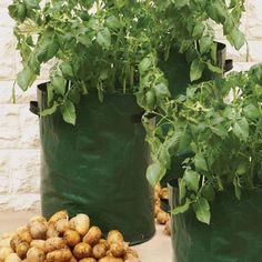 Zak om aardappelen in te kweken op terras of balkon.