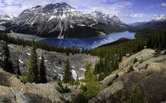 Scarica sfondi canada, albero, foresta, banff, lago di montagna, rocce, montagne, peyto lake