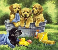 Squeaky Clean by Linda Picken ~ puppies in tub outdoors