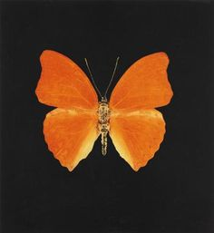 Damien Hirst. Orange Butterfly. Colour Aquatint. 2008 Marketing Software, Event Marketing, Orange Butterfly, Damien Hirst, Addiction, Van, Colour, Detail, Butterflies