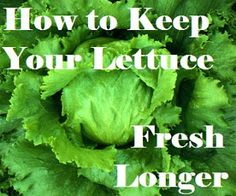 My American Confessions: Tuesday: How to Keep Your Lettuce Fresh in the Fridge