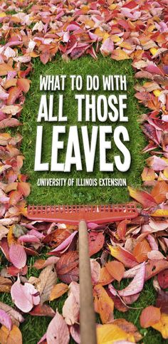 Fall's here, and there's leaves and pine needles everywhere. The question is...what to do with them? Tips from University of Illinois Extension  #leaves