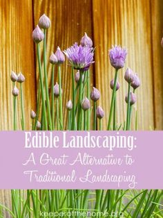 Edible landscaping not only helps cut down on the grocery bill, but it allows you to be a good steward of the space God has entrusted to you! Grow plants for food and natural remedies, instead of growing plants whose only purpose is to be seen!