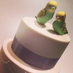 Budgy bird wedding cake by. Cake art by Bec.