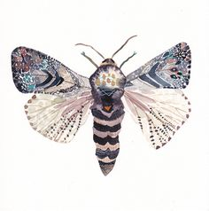 Moth - Archival Print by unitedthread on Etsy https://www.etsy.com/listing/95084310/moth-archival-print