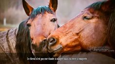 Formula Imm Formula Imm - Art Of Equitation Inspirational Horse Quotes, Farm Images, Horse Feed, Horse Artwork, Gifts For Horse Lovers, Brown Horse, Horse World, All The Pretty Horses, Horse Photography