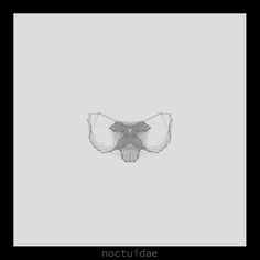 noctuidae .insecta collection #generativeart made with #processing.