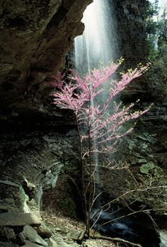 Redbud Falls - Ozark National Forest, Arkansas
