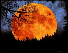 harvest moon | The flame-red moon, the harvest moon,