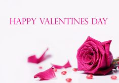 Simple Happy Valentines Day Images in HD size for lovers like girlfriend, boyfriend, husband wife or any kind of lover with lovely pink rose and its petals.  #happyvalentinesday #2018 #hd #image #rose #pink #petals #wishes #beautiful