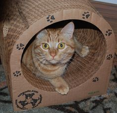 """I just had to take a moment to let you know that the catpod, speed bumps and pucks arrived today and were an instant hit. Jasper went wild sharpening his claws. Jasper Cali and Marmalady explored the catpod and have been playing all around it since it arrived. They LOVE it!!"" - Laura L."