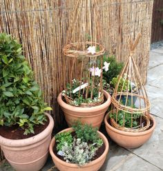 Woven willow plant cages