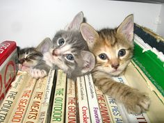 Cats in between books... 2 pick-me-uppers #kittens #books