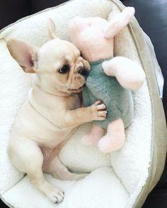 Cuddles with piglet ❤️ …