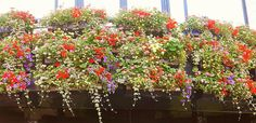 Bloemen in Canterbury, Kent, UK (foto Astrid den Hartog )