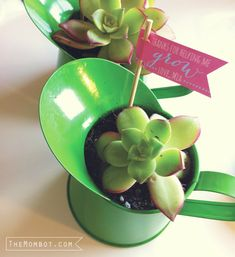 """DIY succulent watering can gift with $1 watering can from the Dollar Tree and free printable """"thanks for helping me grow"""" banner - perfect for #mothersday or for end-of-year #teacher gift 