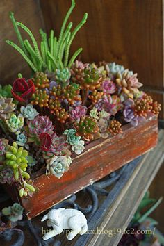 Red Box Succulent Planting