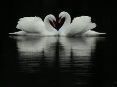 ImageFind images and videos about photography, black and white and animal on We Heart It - the app to get lost in what you love. Swan Love, Beautiful Swan, Beautiful Birds, Beautiful Things, Romantic Things, Reflection Photography, Animal Photography, Heart In Nature, Meeting Your Soulmate