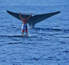 Whale tail trailing in the water right in front of a man on his surf board! Sup Stand Up Paddle, Sup Paddle, Sup Surf, E Skate, Sup Yoga, All Nature, Whale Watching, Ocean Life, Kayaking