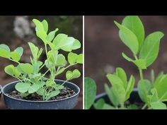 Five Different Soils From Different Parts of the Earth Were Put to the Test. What They Found May Surprise Even The Most Experienced Gardener | World Truth.TV