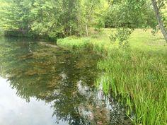 704 816 0526 charlotte nc 864 381 7663 greenville for Farm pond maintenance