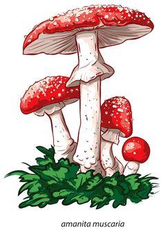 "Photo from album ""Грибы"" on Yandex. Mushroom Paint, Mushroom Crafts, Mushroom Drawing, Decoupage, Mushroom Tattoos, Desenho Tattoo, Hippie Art, Botanical Illustration, Clipart"
