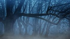 Eerie Forest Color Palette - Color Name Finder Free Pictures, Free Photos, Free Images, Nature Pictures, Pictures Images, Forest Wallpaper, Hd Wallpaper, Nature Wallpaper, Landscaping