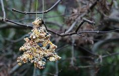 A birdseed ornament hangs on a bare branch.