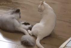 最後のキックで倒れる猫
