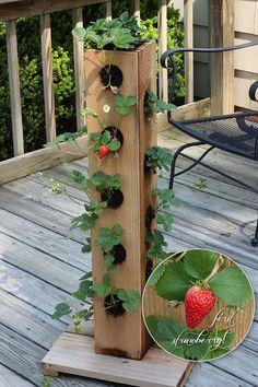 Kein Platz für deine Erdbeeren? Mit dieser Idee sparst du viel Platz und kannsz trotzdem deine eigenen Erdbeeren genießen!