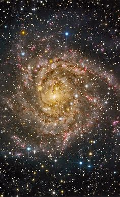 IC 342, the Hidden Galaxy, is positioned only 10 degrees above the plane of our Milky Way Galaxy, so its light is heavily obscured and reddened by dust. It is 7 million light-years away but is not part of our Local Group of galaxies. Credit: Bruce Waddington