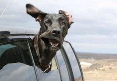 Honden in de wind #funny