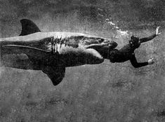 Another shark attack photo. This can't be real.