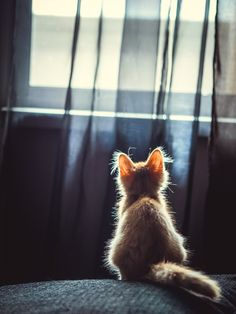 Photograph Cat by LuckyImages on 500px