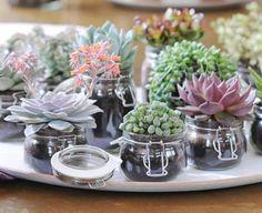 Mobile sukkulenten einmachglas