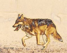 Mexican WOLF Southwest Native American Totem by GrayWolfGallery