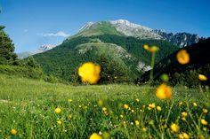 Panorámica primaveral del Pirineo aragonés.
