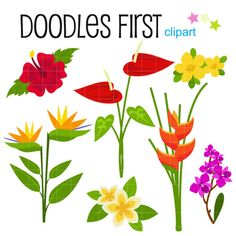 This clipart set includes the 7 following elements.    1 x Allamanda  1 x Anturium  1 x Bird of Paradise  1 x Fragipani  1 x Heliconia  1 x Hibiscus  1 x Orchid    Each clipart illustration is included separately as a high resolution PNG file with a transparent background and also as a JPG with a white background    Each object is provided at a sizes of 5.5 Inches on its longest side. The PNG makes it versatile to scale for any project.    No watermarks will appear on purchased items.    The…
