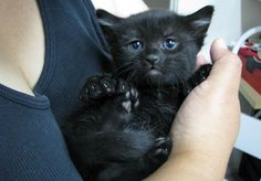 Black cat and black kittens pics Cute Cats And Kittens, I Love Cats, Crazy Cats, Kittens Cutest, Baby Kittens, Pretty Cats, Beautiful Cats, Animals Beautiful, Baby Animals