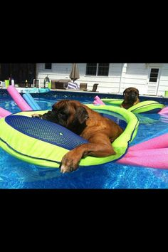 Wading in the pool. . .don't mind me!!