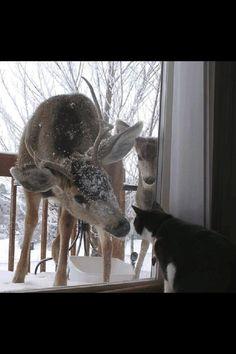 Winterzeit Hirsch Reh Katze Schnee